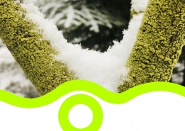 Baum Moos Schnee